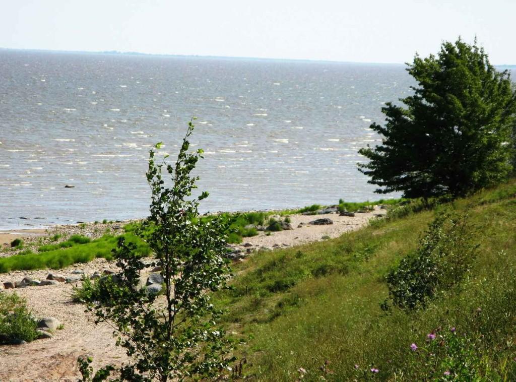 Озеро Ильмень - фото
