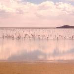 Фламинго на боливийском озере Поопо