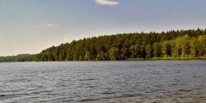 Лес на берегу Виштынецкого озера
