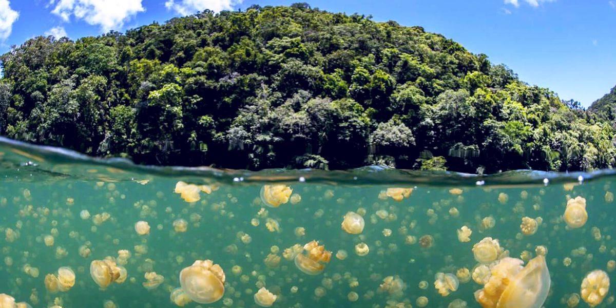 Озеро Медуз в Республике Палау