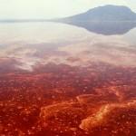 Уникальное африканское озеро Натрон
